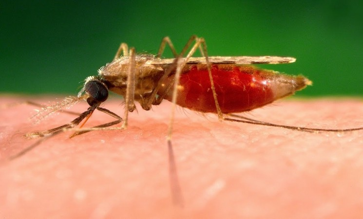 Which Malaria Treatment Is Best For You?