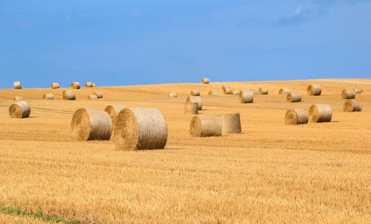 7 Mild To Severe Hay Fever Symptoms